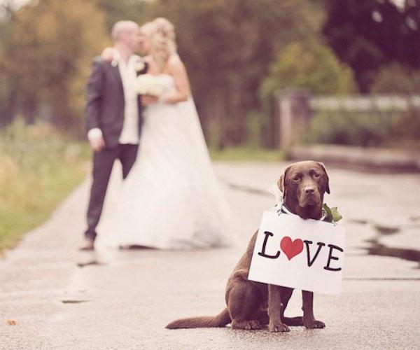 Include Your Dog In Your Wedding Day Socialandpersonalweddingsie