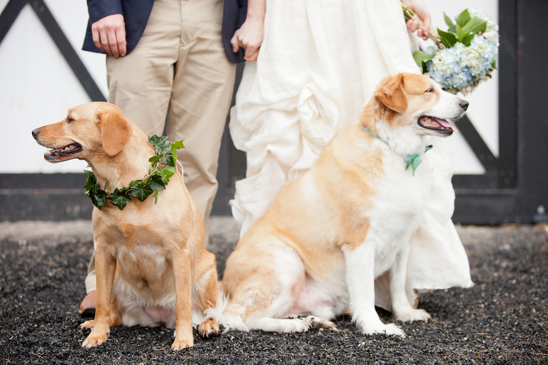 uneven bridal party dogs