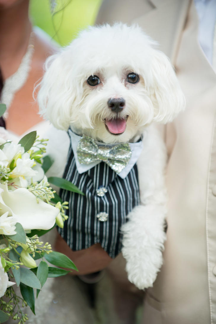 7 WAYS TO DRESS YOUR DOG FOR YOUR WEDDING ...