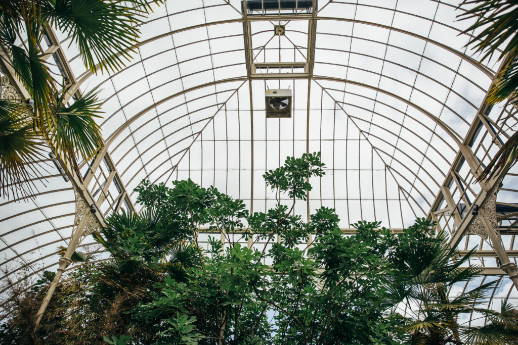 A glass conservatory ceiling with gold metal arches. There are large green trees at the left, right and center of the image