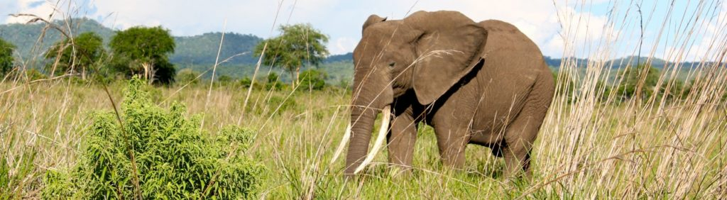 Wedding Gift List World Animal Protection Charity Donation The Wedding Shop.